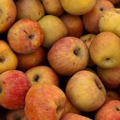 Fuji Apples 1