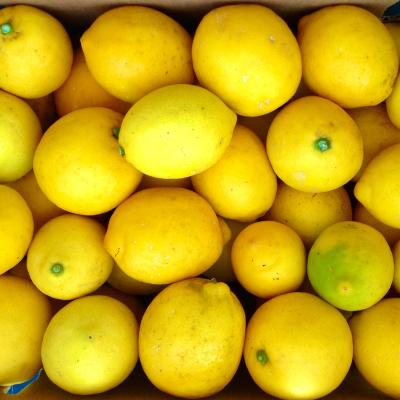 lemon meyer_coke