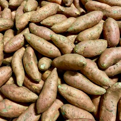 sweet potato_countrysweet2