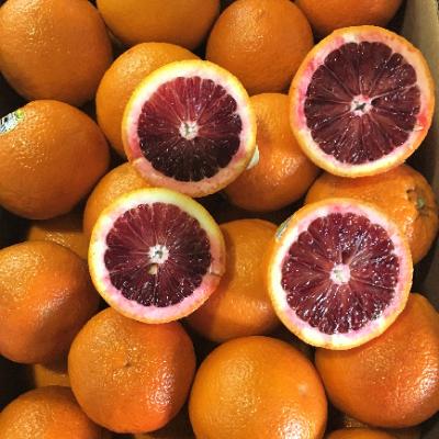 orange-blood_fruitworld